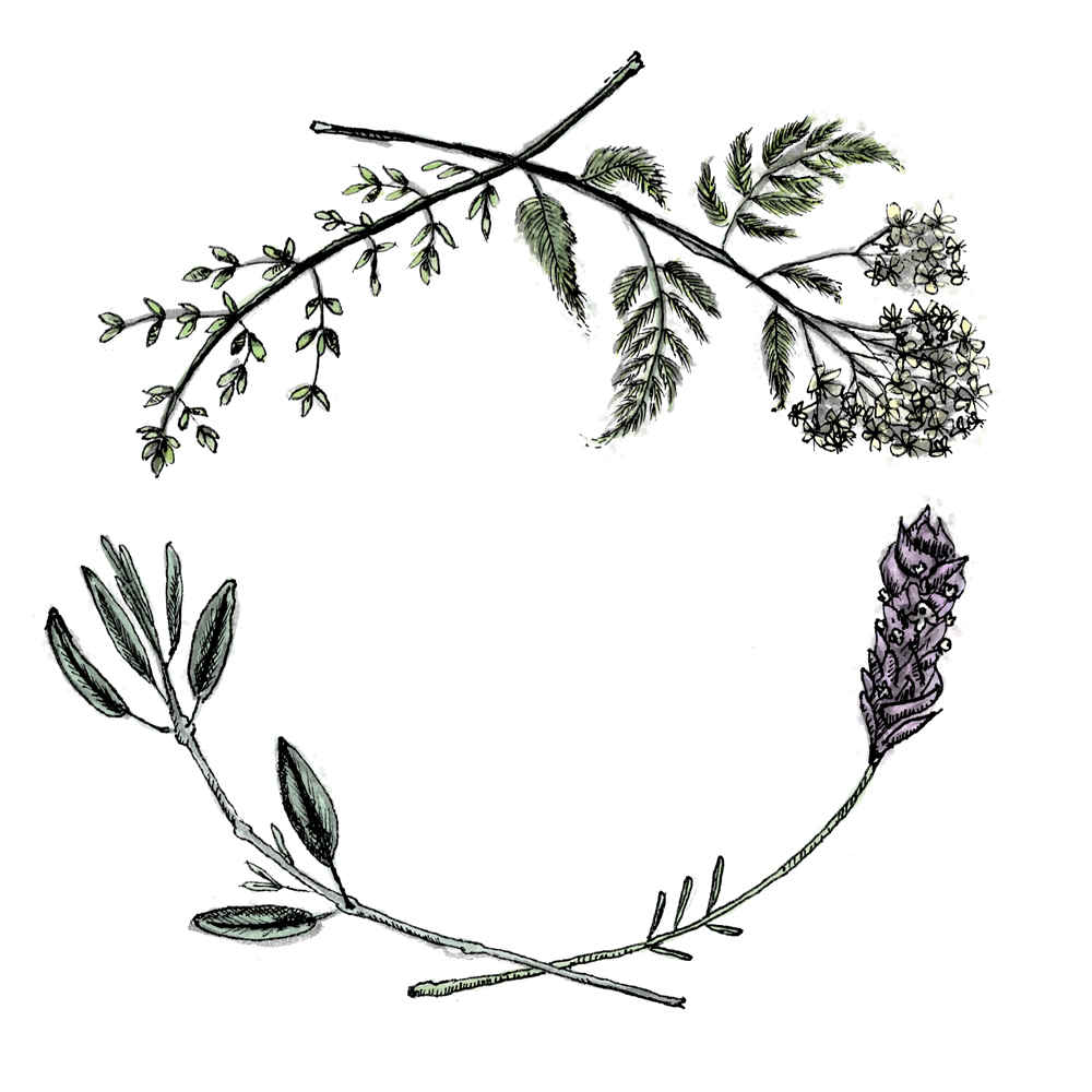 Drawn lavender black and white #15