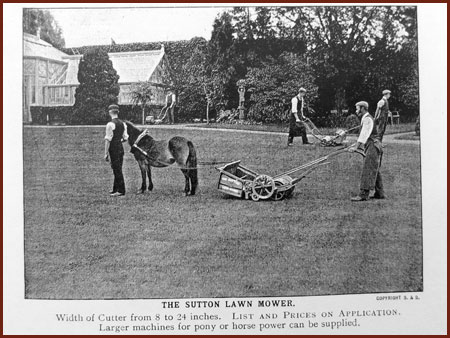 Drawn lawn Rather lawn Used pony This