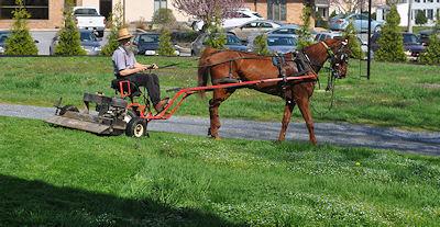 Drawn lawn Amish Horse Amish lawn mower
