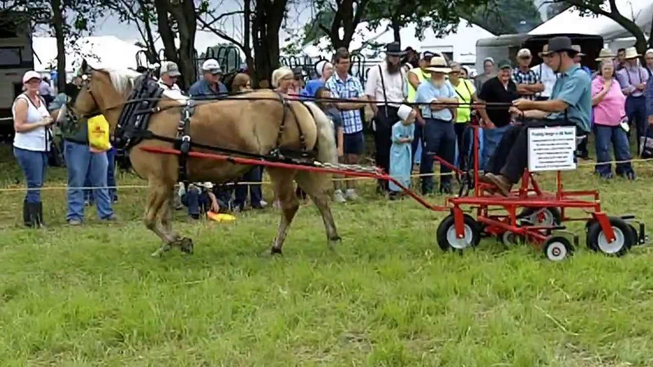 Drawn lawn Powered Horse Lawn Mowing Horse