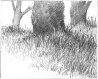 Drawn bush grass Joshua Nature and Grass Grass