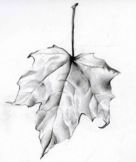 Drawn leaf 25+ Leaf #1 Leaf drawing