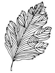 Drawn leaf Leaf Leaf Leaf Hand Repulseweb