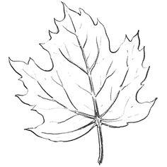 Drawn leaf #2