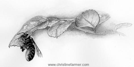 Drawn rose bush leaf Drawing drawing Realistic  Draw