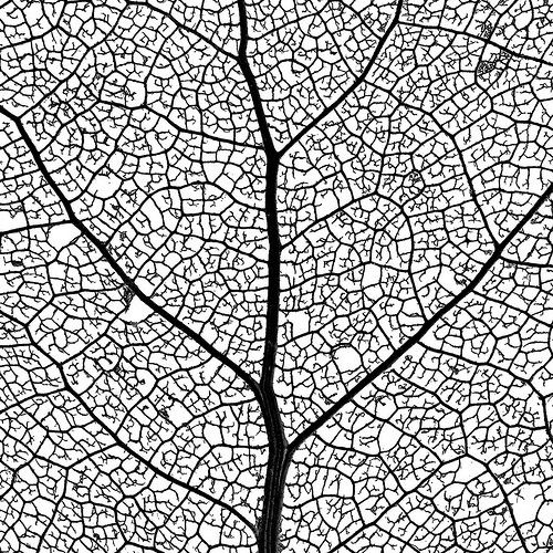 Drawn leaves leaf texture Picture 31 Leaf Pinterest images