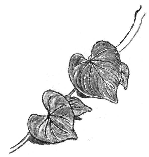 Drawn leaves vine leaf Leaves graenflame graenflame on by