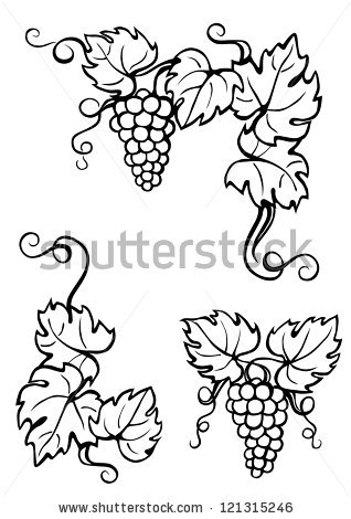 Drawn leaves vine White vine leaves black dokoupilova