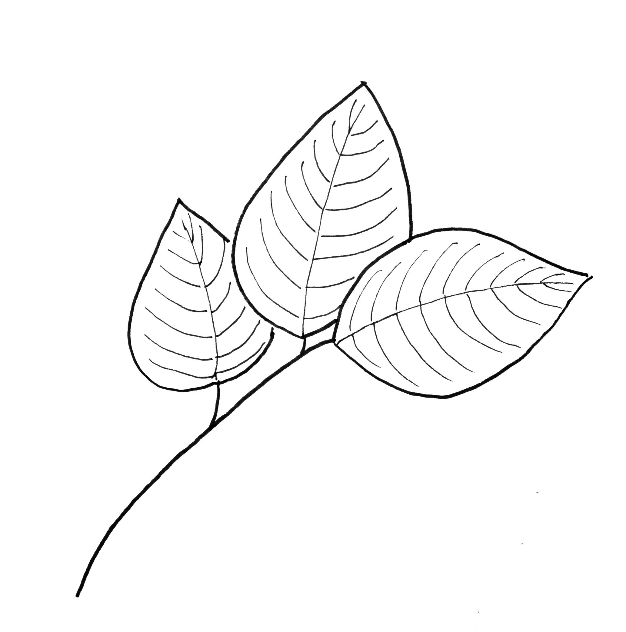 Drawn leaves pattern Just Fall dogwood leaves Printables