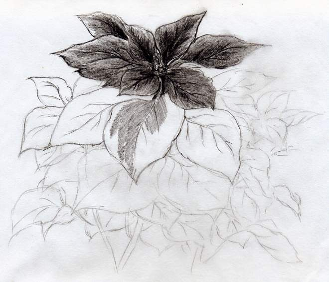 Drawn leaves shaded leaf Is start work directly the