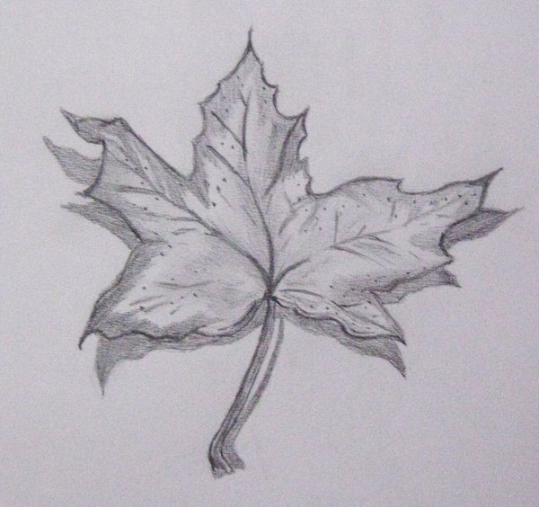 Drawn leaves shaded leaf By Leaf Out1919 Leaf by