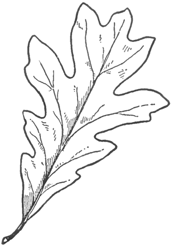 Drawn leaves simple Oak to with Leaves Draw