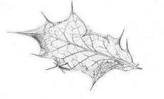 Drawn leaf Pencil (10x6cm) Leaf Skeleton Botanical