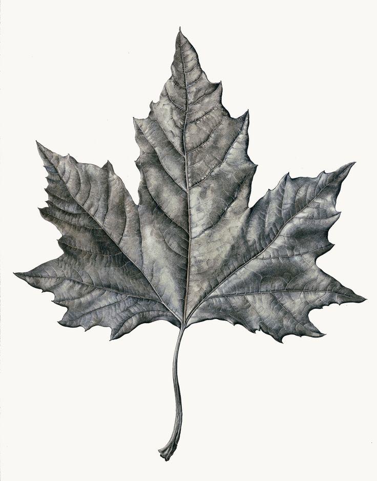 Drawn leaves detailed Drawing Rosie Leaf Best ideas