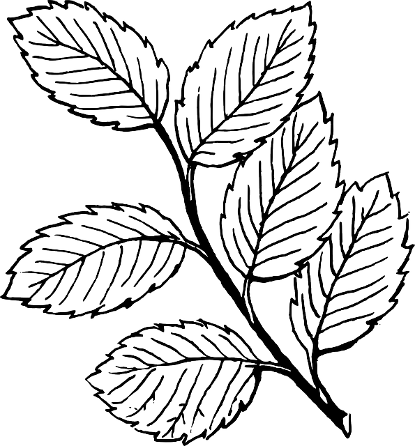 Drawn leaves outline Pixabay Branch Free Vector Tree
