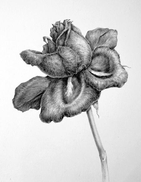 Drawn leaves tonal Drawing Pinterest Botanica Drawings tonal