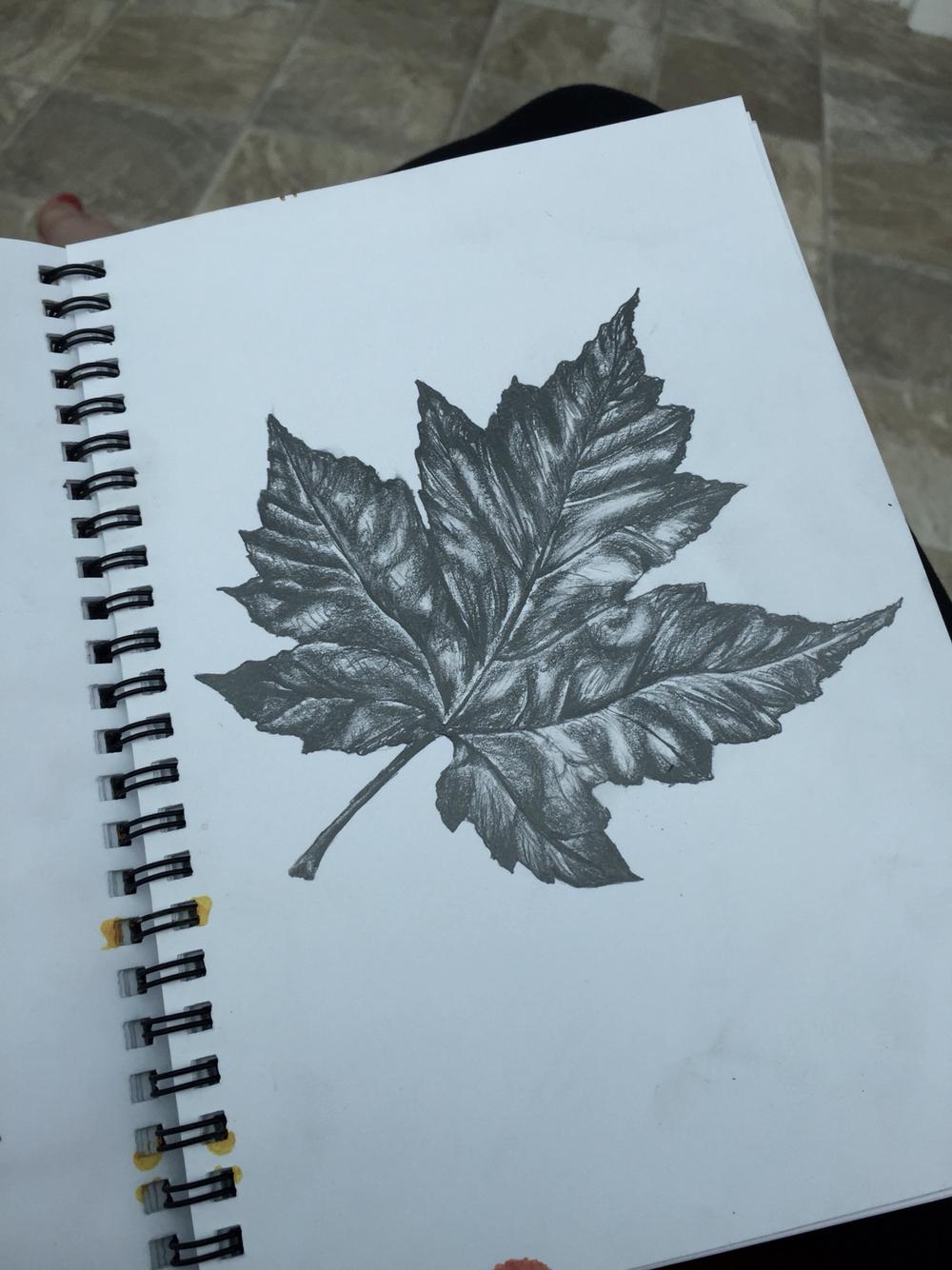 Drawn leaves tonal A Tonal Gcse leaf drawing