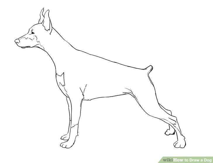Drawn puppy real dog To Draw wikiHow Step Image