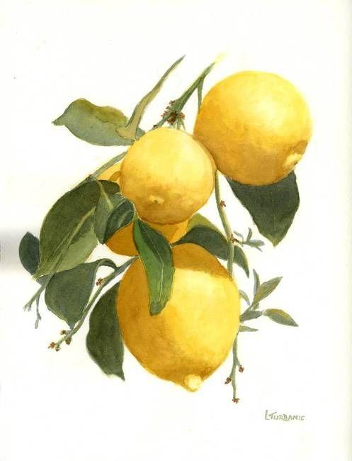 Drawn lemon By Pinterest on Lenora ideas