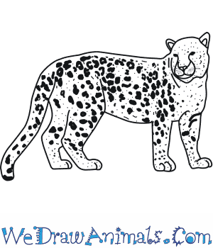 Drawn leopard Amur an Draw  to