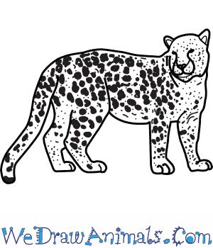 Drawn leopard Leopard an Draw to Print