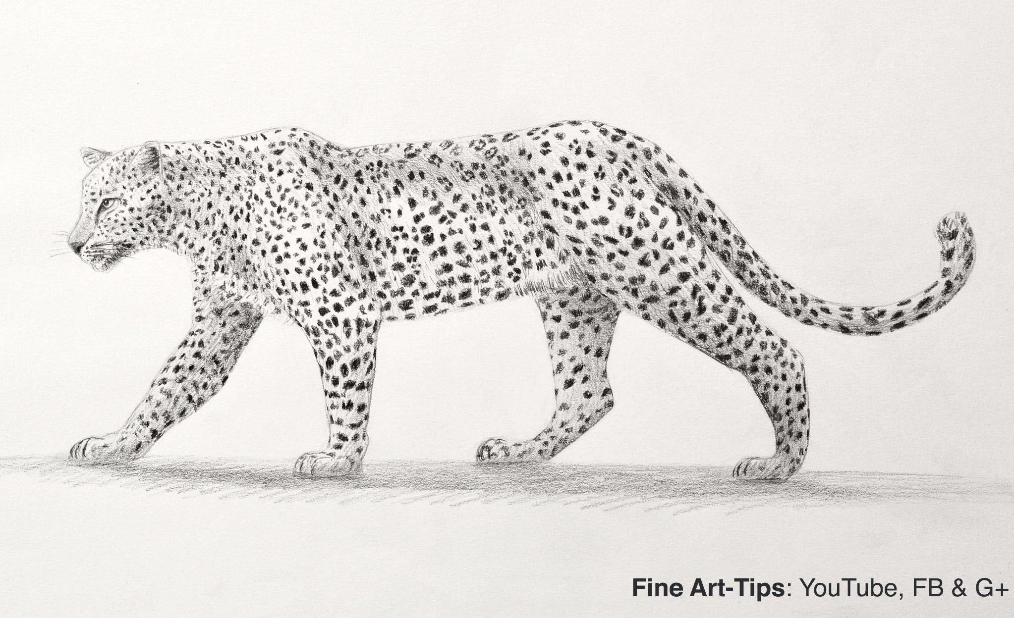 Drawn leopard Cat Big With Pencil Big