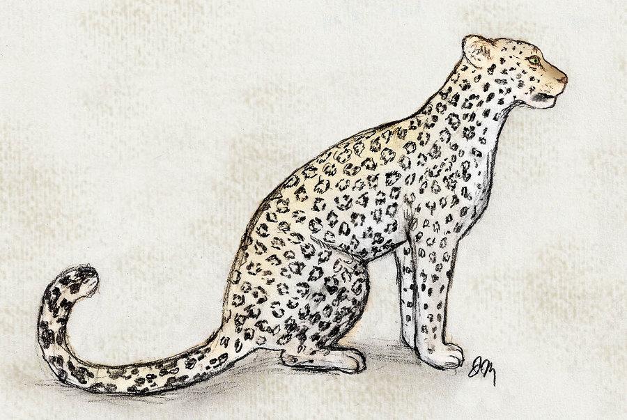 Drawn leopard On Werwal Leopard Amur DeviantArt