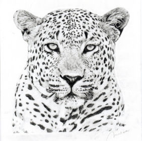 Drawn leopard Drawing Pencil Realistic Leopard Images