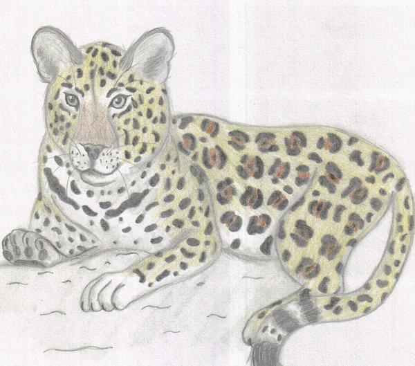 Drawn leopard On yellowfox02 drawing Leopard DeviantArt