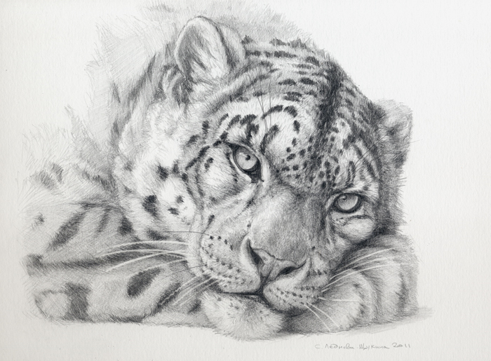 Drawn snow graphite By Drawings sschukina Leopard Leopard