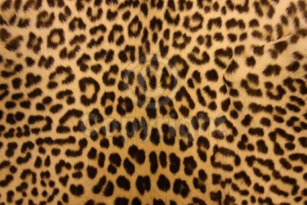 Drawn leopard skin background twitter Wallpaper Animal Cave wallpapers Wallpaper
