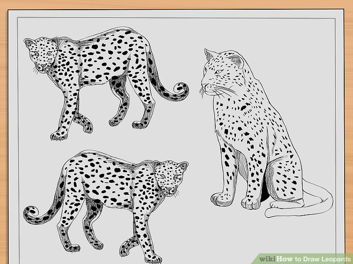 Drawn leopard skin cheetah Step Leopards: 10 Pictures) titled