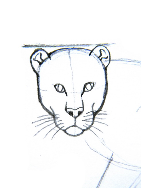Drawn leopard skin easy Steps 11 years How Draw