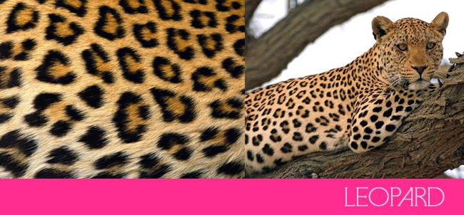 Drawn leopard skin gold Prints  Lets Prints Cheetah