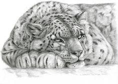 Drawn leopard skin sketch Leopard nicolai 1881 Snow a