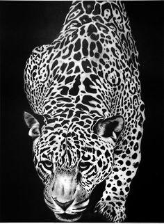 Drawn leopard skin sketch Tattoo Canvas Print Art Leopard