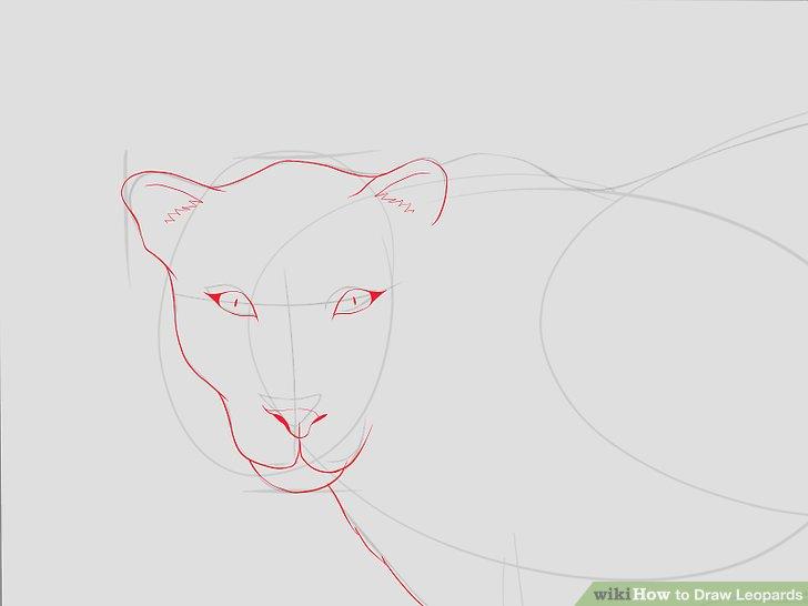 Drawn leopard skin sketch Titled Draw 5 Image Leopards: