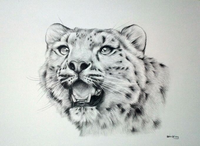 Drawn leopard skin sketch This Pin on Find drawing