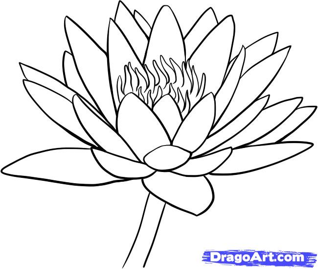Drawn lily Water draw 9 Water a