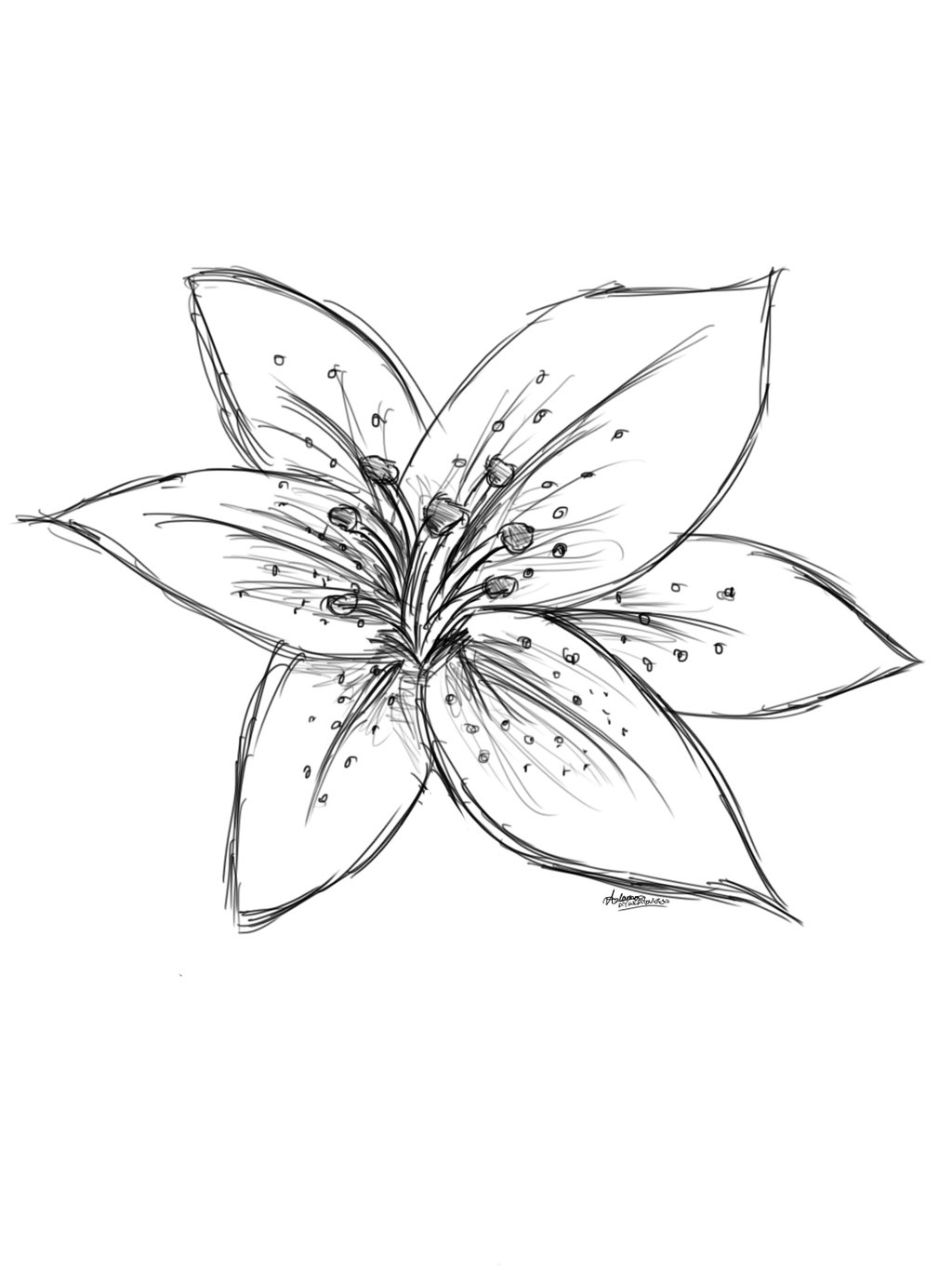 Drawn lily Lilies Google Search Search Drawings