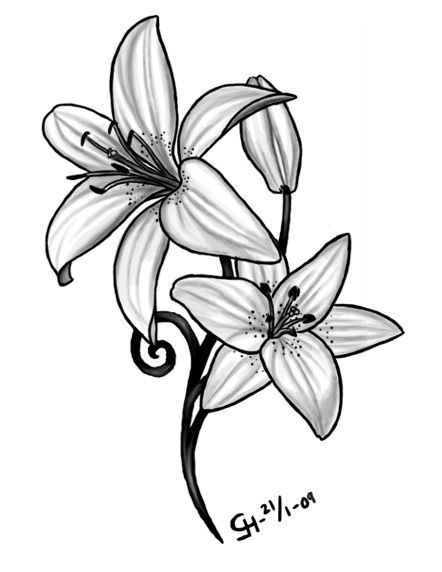 Drawn amd lily Floral on Wei Lily Pinterest