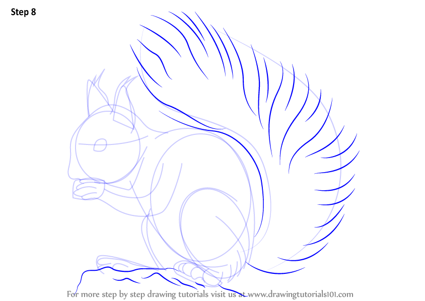 Drawn squirrel red squirrel To Learn How : the