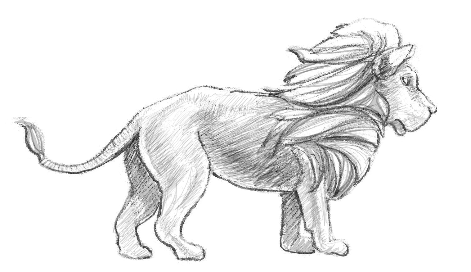 Drawn lion By To Here's Step a