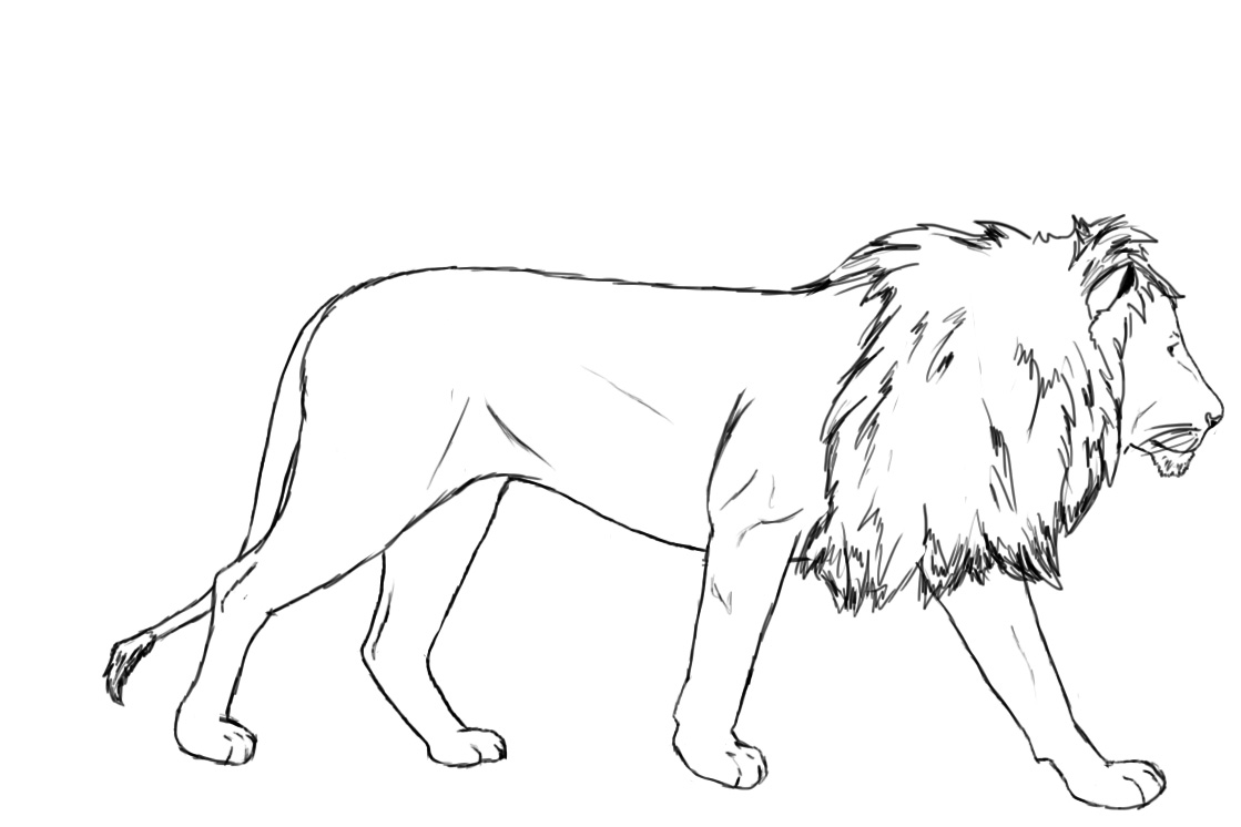 Drawn lion Central To  Draw A