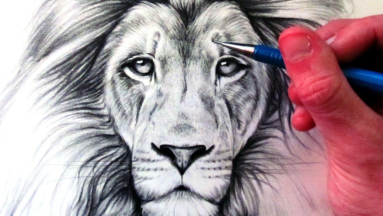 Drawn lion To  YouTube a Draw