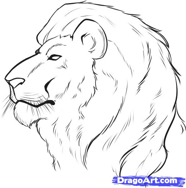 Drawn simple lion Draw by a Face