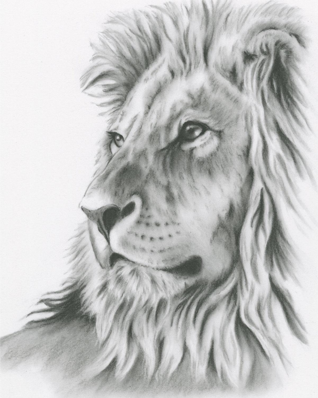 Drawn lion Drawing 8