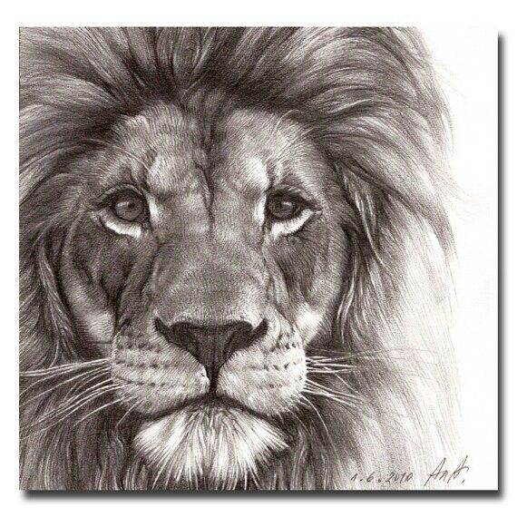 Drawn lion Drawing drawing only Pinterest Stunning