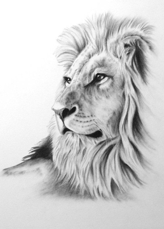 Drawn lion Listing found https://www on DrawingDrawing