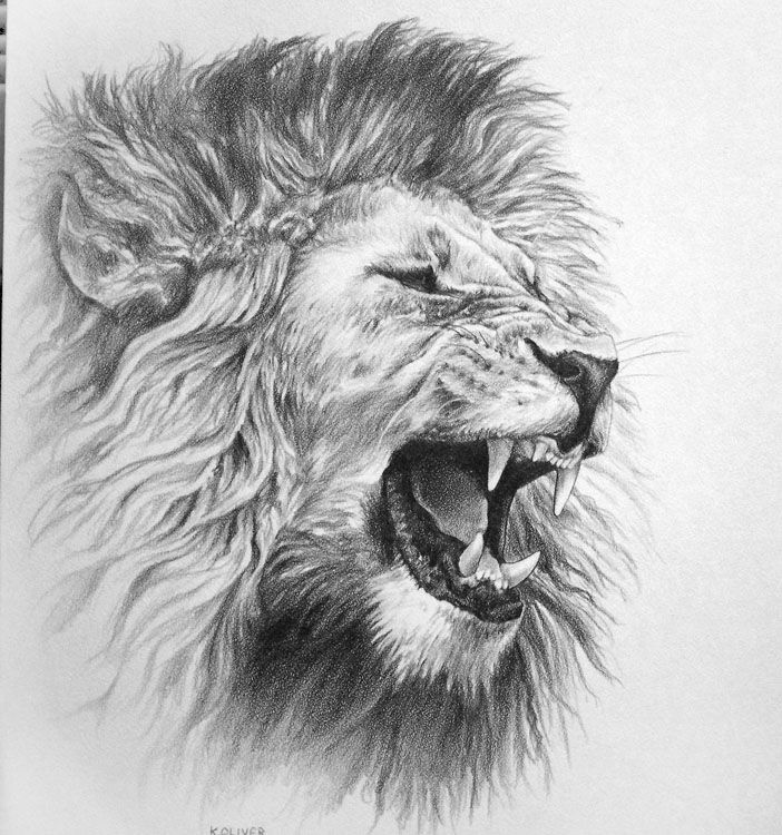Drawn lion Drawing drawing Search Donna's Animal